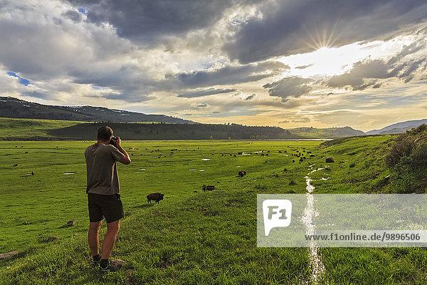 USA  Yellowstone Nationalpark  Mann fotografiert Büffelherde im Lamar Valley