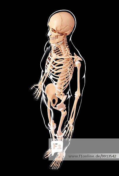Kunstwerk Menschliches Skelett