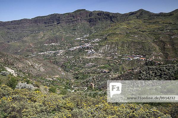 Ausblick von einem Wanderweg unterhalb des Roque Nublo auf blühende Vegetation  den Barranco de Tejeda und Tejeda  Gran Canaria  Kanarische Inseln  Spanien  Europa