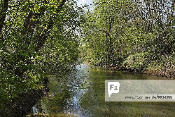Lafnitz river  Wörterberg  southern Burgenland  Burgenland  Austria  Europe