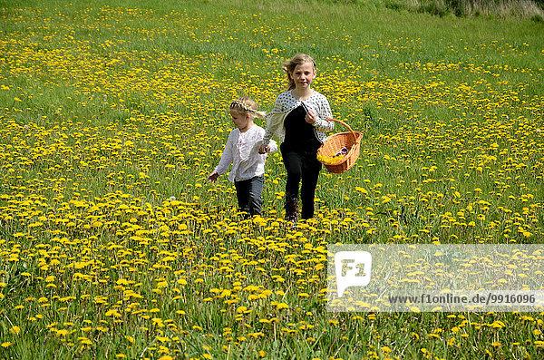 Zwei Mädchen gehen über Löwenzahnwiese  Ystad  Schweden  Europa