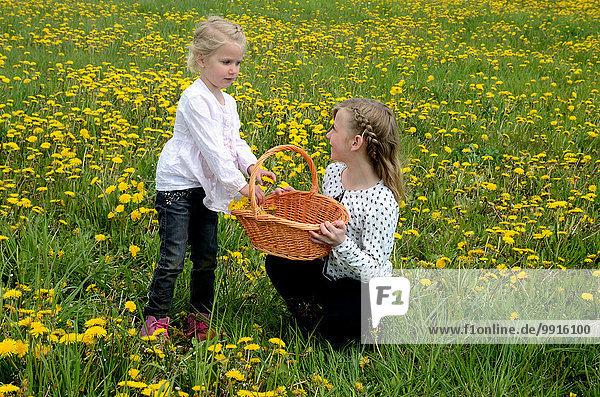 Zwei Mädchen pflücken Löwenzahn  Ystad  Schweden  Europa
