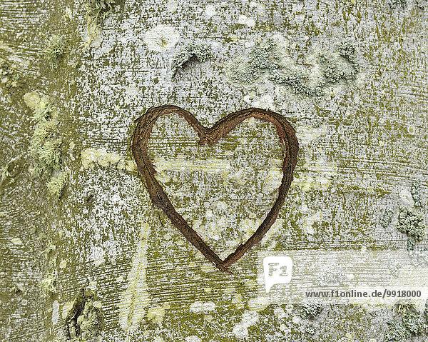 Baum herzförmig Herz schnitzen Bad Doberan Deutschland