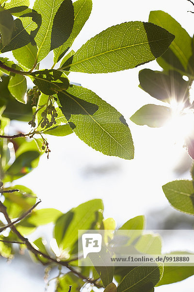 Frankreich Close-up Blendenfleck lens flare Aquitanien Schlaghose Sonne