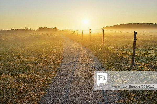 Ländliches Motiv ländliche Motive Sommer Morgen Weg Dunst Deutschland Niedersachsen Norderney Nordsee