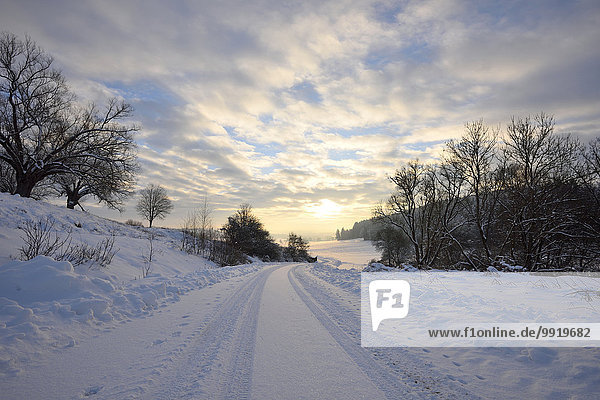 Landscape of Snowy Road on Winter Morning  Upper Palatinate  Bavaria  Germany