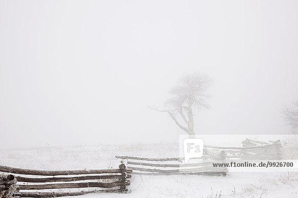 Kälte Tag Himmel weiß Boden Fußboden Fußböden Schnee