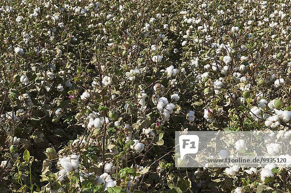 Außenaufnahme Tag Landwirtschaft niemand Feld anbauen Wolle Plumpsklo Asien Zentralasien Seidenstraße Usbekistan