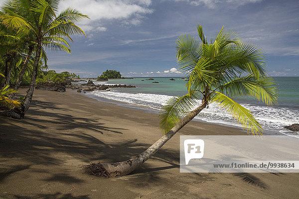 Strand Küste Meer Natur Pazifischer Ozean Pazifik Stiller Ozean Großer Ozean lateinamerikanisch Kolumbien Palmenstrand Südamerika