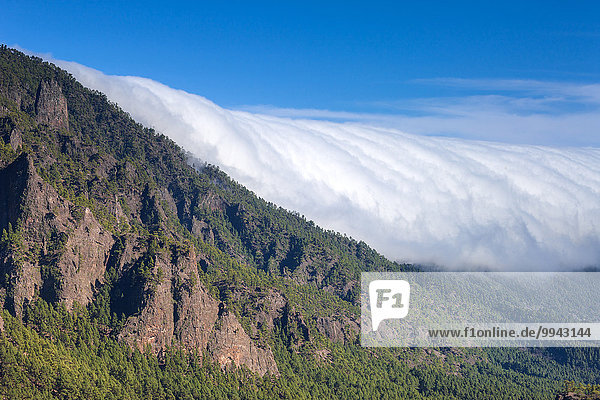Cumbre Nueva  Spain  Europe  Canary islands  La Palma  fog  nebulous waterfall  wood  forest  rock  cliff