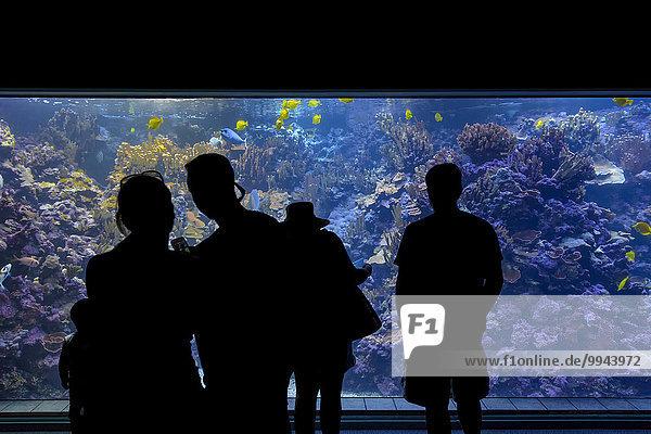 Aquarium im Maui Ocean Center  Maalaea  Wailuku  Maui  Hawaii  USA  Nordamerika