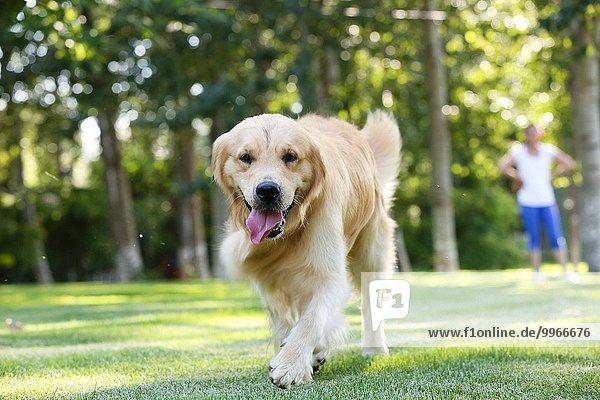 Hund Gras