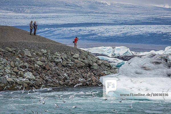 Eisberg Eis Jökulsárlón Island Lagune