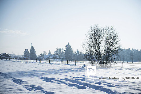 Winter landscape of snow-covered fields  Bavaria  Germany Winter landscape of snow-covered fields, Bavaria, Germany
