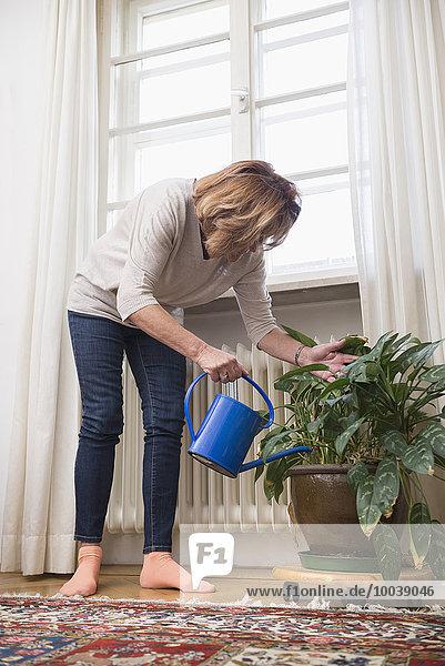 Senior woman watering houseplant near window  Munich  Bavaria  Germany