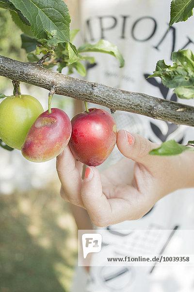 Apfel aufheben