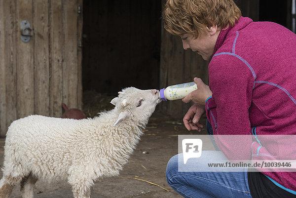 Woman feeding lamb with bottle  Bavaria  Germany Woman feeding lamb with bottle, Bavaria, Germany