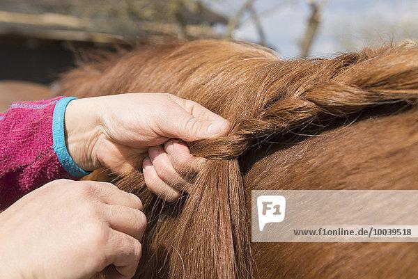 Woman's hands making braids of horse hair  Bavaria  Germany