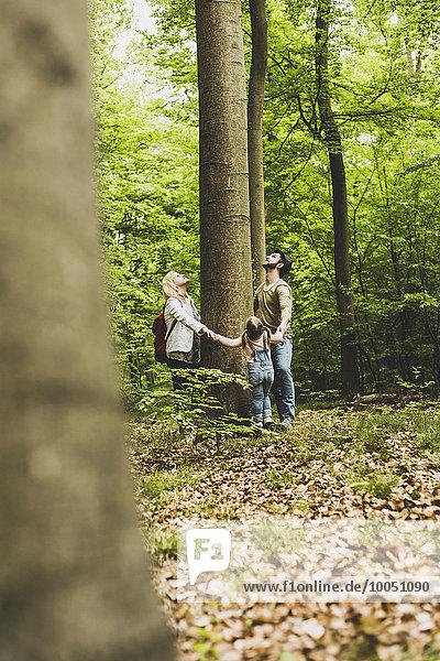 Familie im Wald  die um den Baumstamm steht und nach oben schaut.