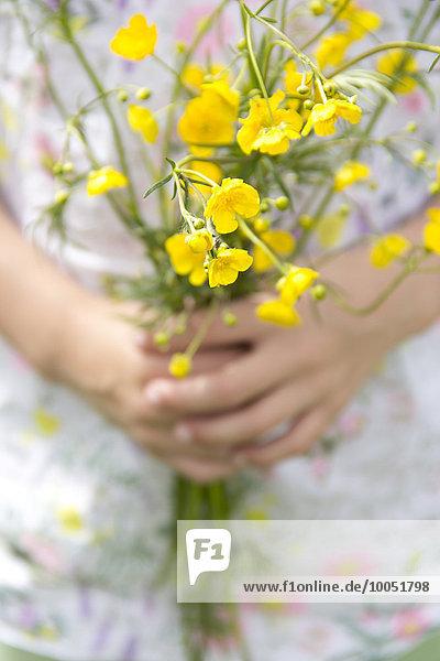 Kleine Mädchenhände halten einen Haufen Butterblumen.