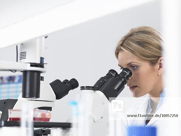 Wissenschaftler betrachten Stammzellkulturen  die im Wachstumsmedium unter einem inversen Mikroskop in einem Labor wachsen.