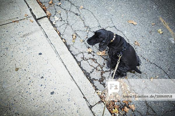 Schwarzer Hund an der Leine sitzend auf der Straße