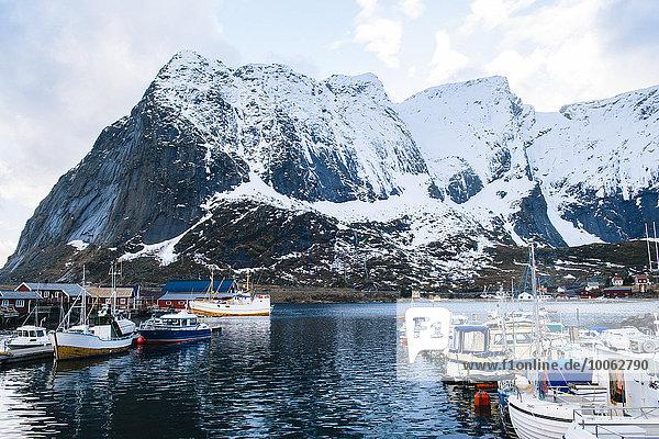 Fishing boats in harbour  Reine  Lofoten  Norway
