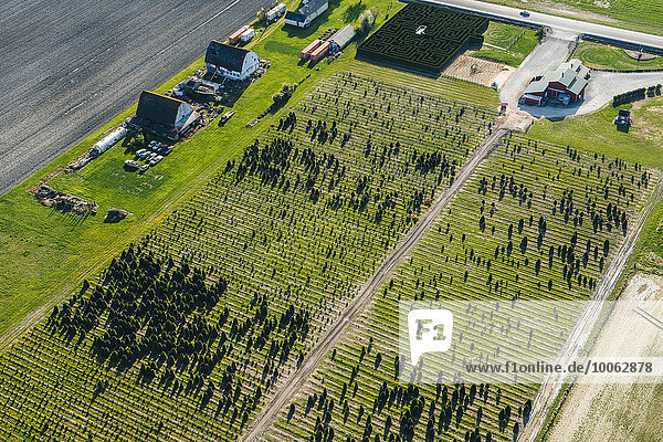 Aerial view of rows of trees growing in plant nursery