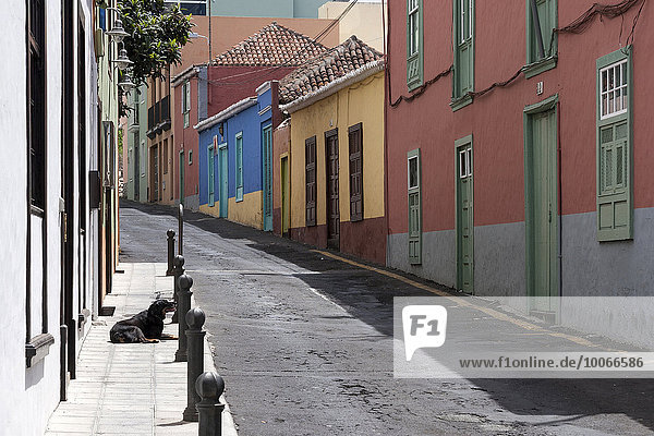 Gasse mit bunten Häusern in der Altstadt von Los Llanos  La Palma  Kanarische Inseln  Spanien  Europa
