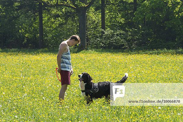 Junger Mann spielt Frisbee mit Hund  Border Collie  gelbe Blumenwiese  Perlacher Forst  München  Bayern  Deutschland  Europa