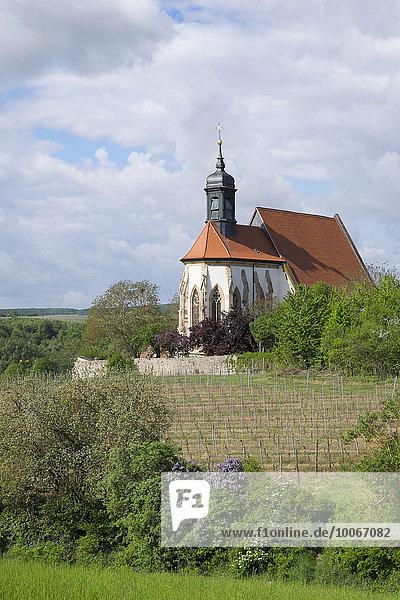 Wallfahrtskirche Maria im Weingarten  Volkach  Mainfranken  Unterfranken  Franken  Bayern  Deutschland  Europa