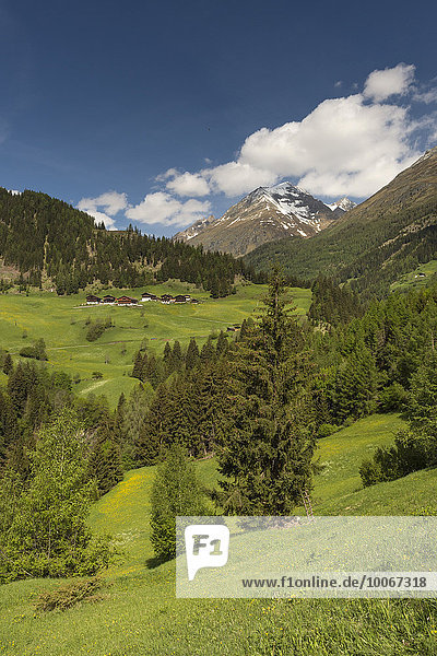 Gebirgslandschaft mit Bauernhäusern  bei Prägraten am Großvenediger  Virgental  Osttirol  Österreich  Europa