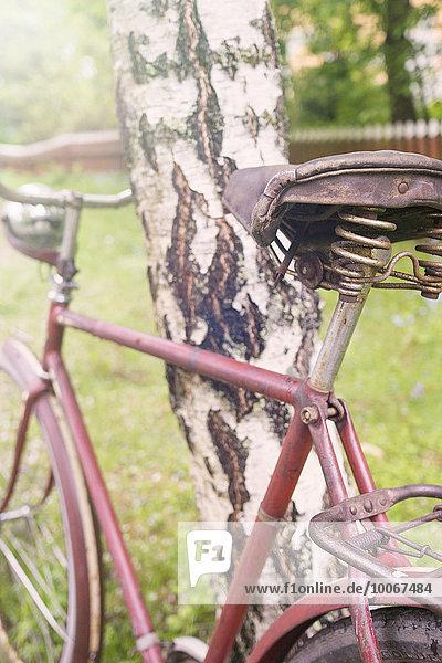 Ländliche Szene mit altem Retro-Bike  Fahrrad  angelehnt an Baum  Birke  Schweden  Europa