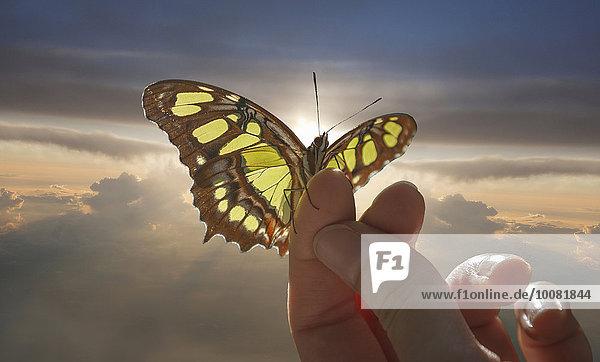 Europäer Frau Wolke Himmel halten Schmetterling