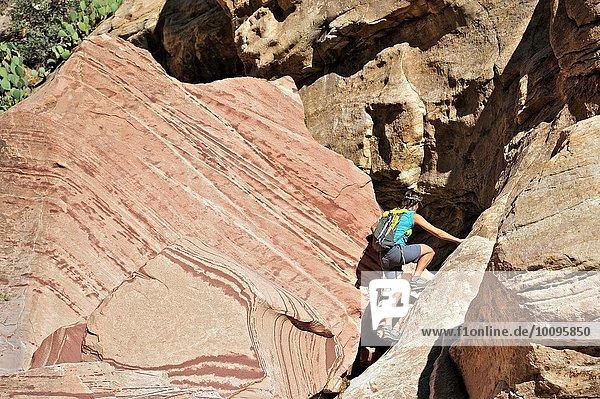 Junge Klettererin auf den Mount Wilson  Nevada  USA