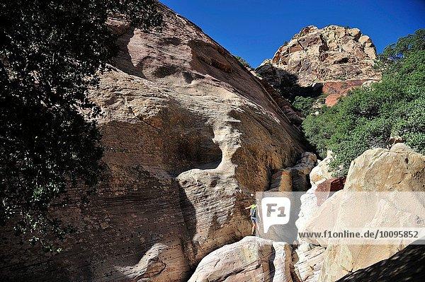 Fernsicht einer jungen Kletterin auf den Mount Wilson  Nevada  USA