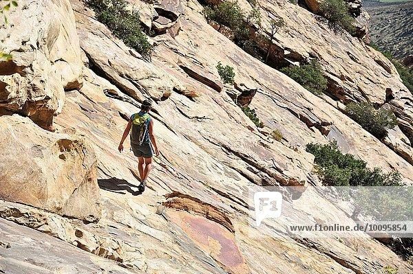 Junge Klettererin mit steiler Felswand  Mount Wilson  Nevada  USA