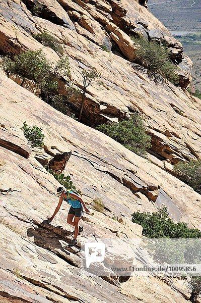 Junge Klettererin klettert steile Felswand  Mount Wilson  Nevada  USA