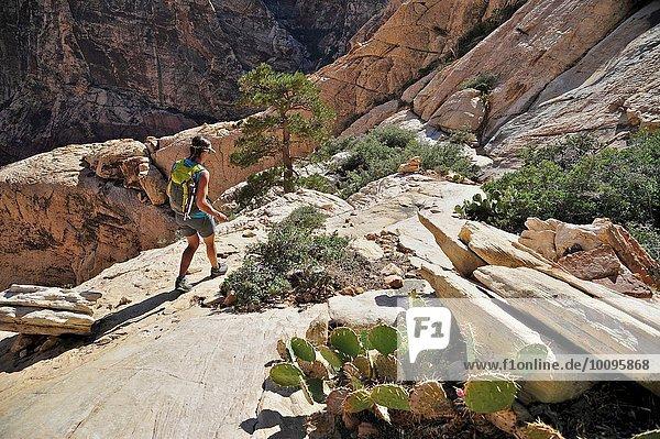 Junge Wanderin auf Felsen  Mount Wilson  Nevada  USA