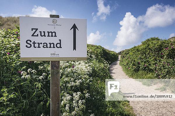 Weg durch die Dünen  Wenningstedt-Braderup  Sylt  Schleswig-Holstein  Deutschland  Europa