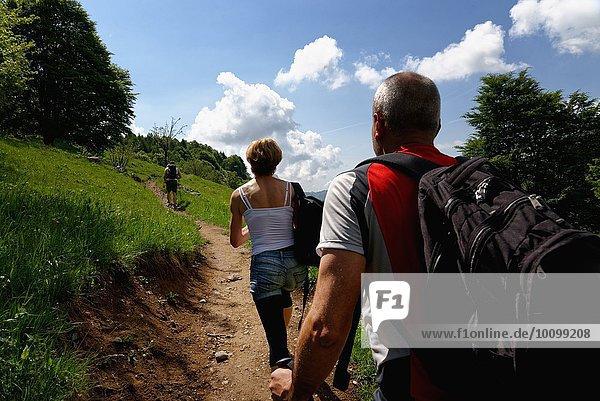 Rückansicht von drei reifen Wanderern  die den Weg hinaufwandern