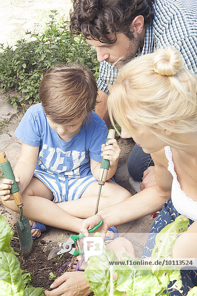 arbeiten Junge - Person Hilfe klein Menschliche Eltern Gemüse Garten