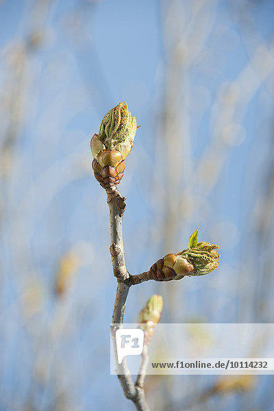 Leaves budding on branch