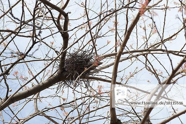 Baum Baum