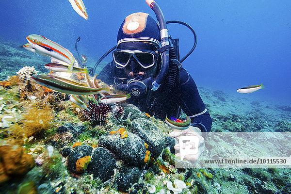 Forschung Taucher Meer Adriatisches Meer Adria