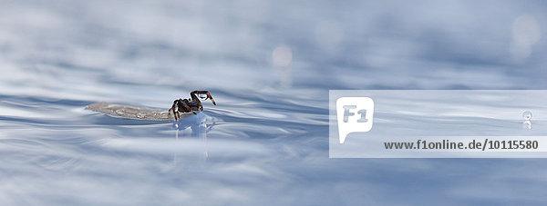 Wasser fließen Trümmer Spinne Wasser,fließen,Trümmer,Spinne