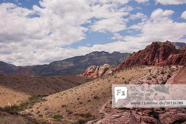 Red Rock Canyon National Conservation Area landscape  Las Vegas  Nevada  USA
