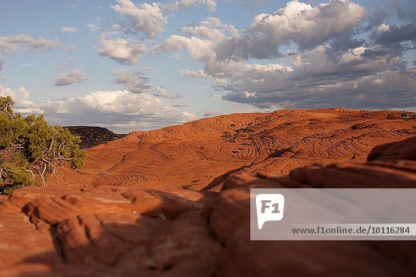 View of petrified dune  Snow Canyon State Park  Utah  USA