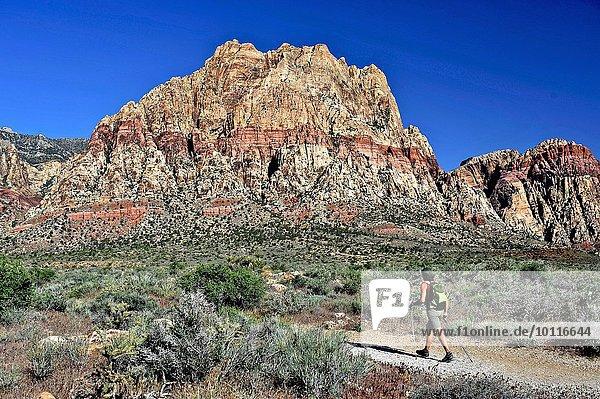 Rückansicht des Wanderers  First Creek  Las Vegas  Nevada  USA