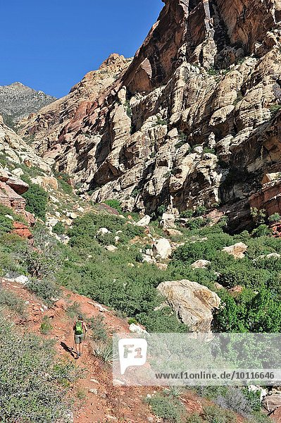 Hochwinkel-Rückansicht des Wanderers  der in Richtung Felswand läuft  First Creek  Las Vegas  Nevada  USA